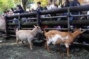 川崎の夢見ヶ崎動物公園で「秋の動物園まつり」 バックヤードツアー、吹き矢体験も