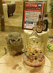 吉祥寺でフクロウと触れ合えるカフェ&バー『ふくろうの里』-様々な種類のフクロウが続々仲間入り