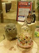 吉経・上半期PV1位は「フクロウと触れ合えるカフェ&バー『ふくろうの里』」