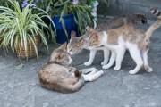 三鷹のカフェで猫の写真展とマルシェ あおいとりさんが自然体の猫を撮影