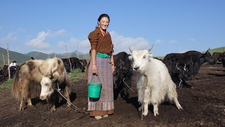 しぼりたてのミルクを中心に、手仕事をして暮らすチベット牧畜民のくらし(写真提供 東京外国語大学)