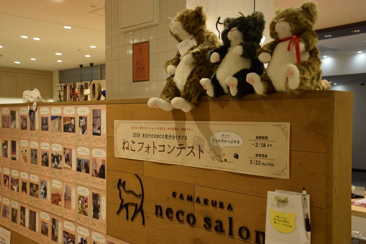応募された「うちの子のつぶやき」がテーマのネコの写真が飾られた店頭