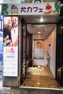 吉祥寺に初の犬カフェ 小型犬20匹が「出勤」