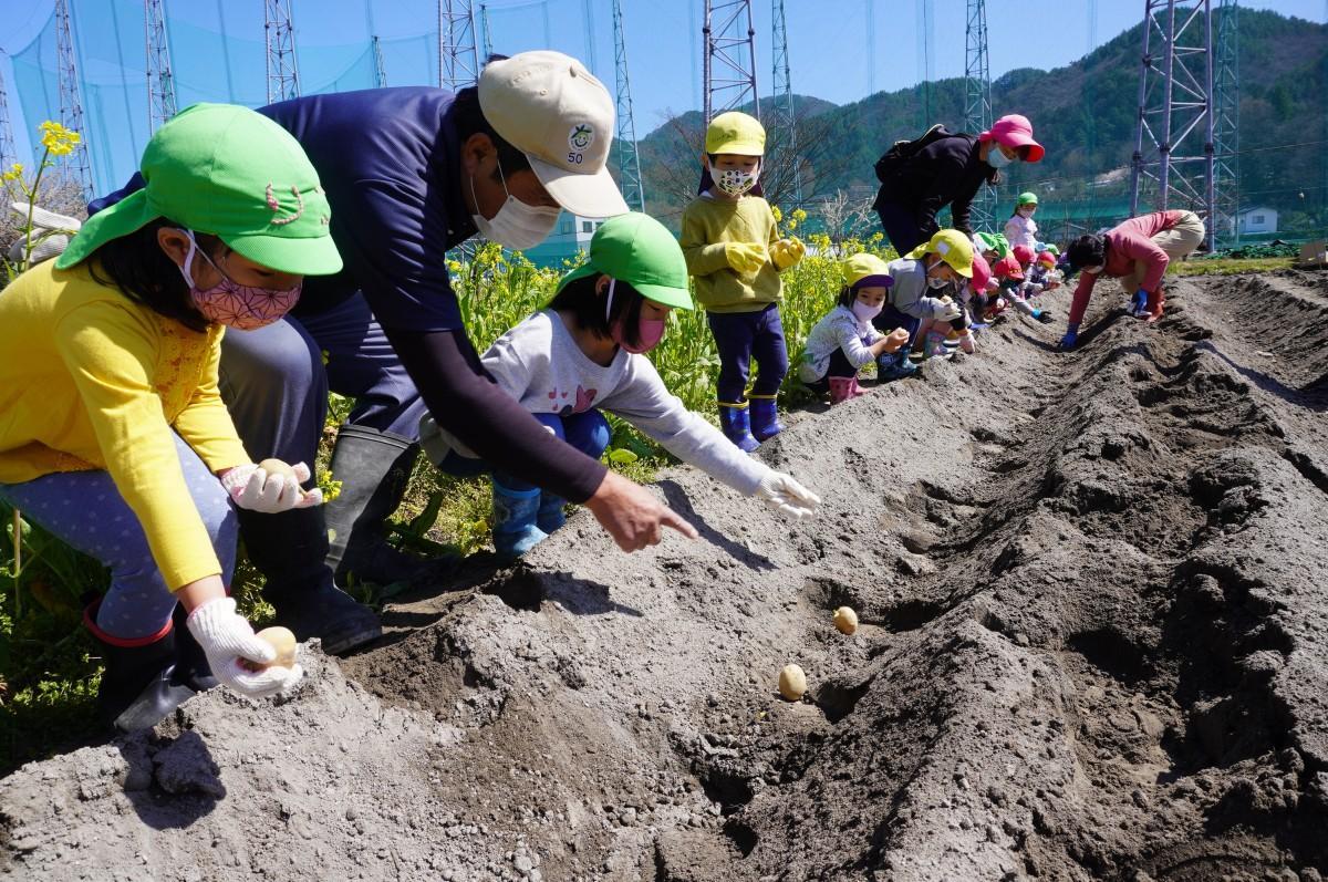 内川篤さんの指導でジャガイモを植える園児たち