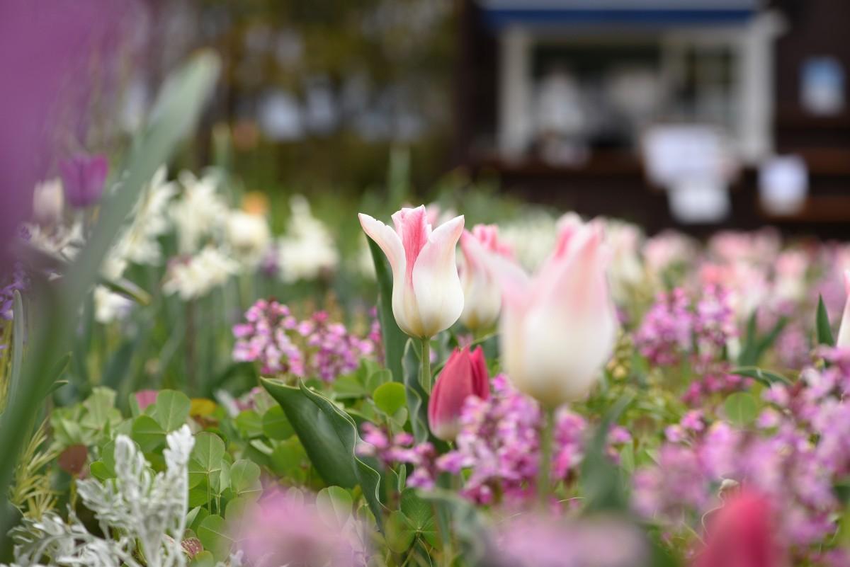花々が咲き競う庭園