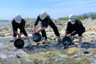 高瀬川の改修請負事業者がニジマス放流 地域や地元漁協へ恩返し