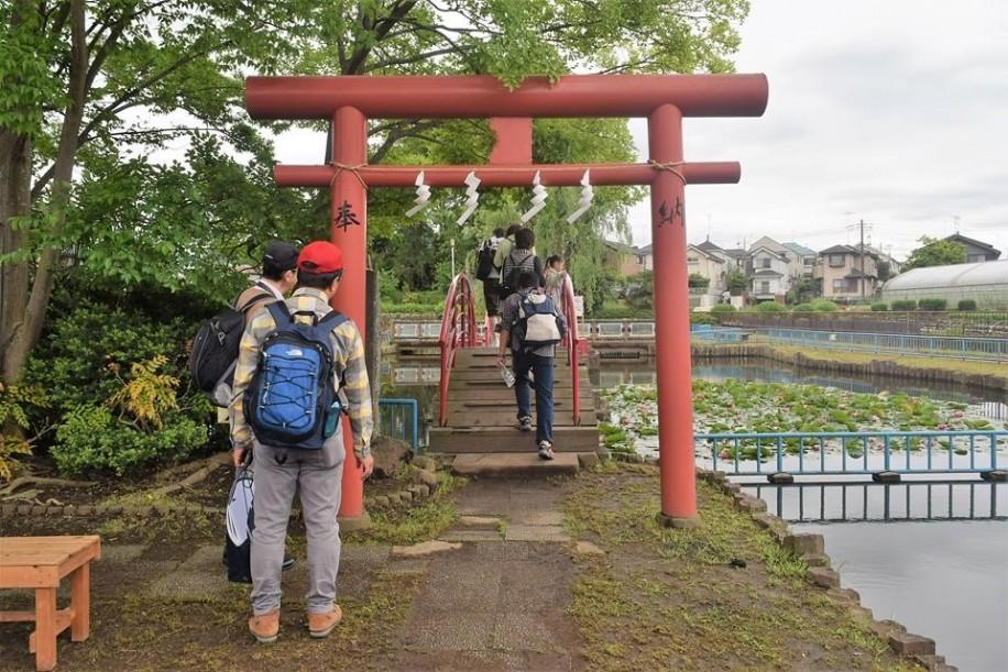 弁天池公園で出世弁財天の社(やしろ)へ続く太鼓橋を渡る