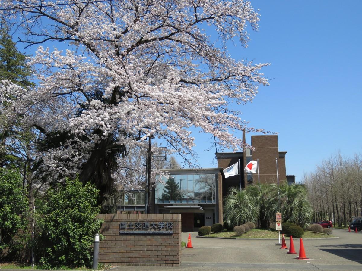 国土交通大学校外観。春には桜の花が道行く人の目を楽しませる