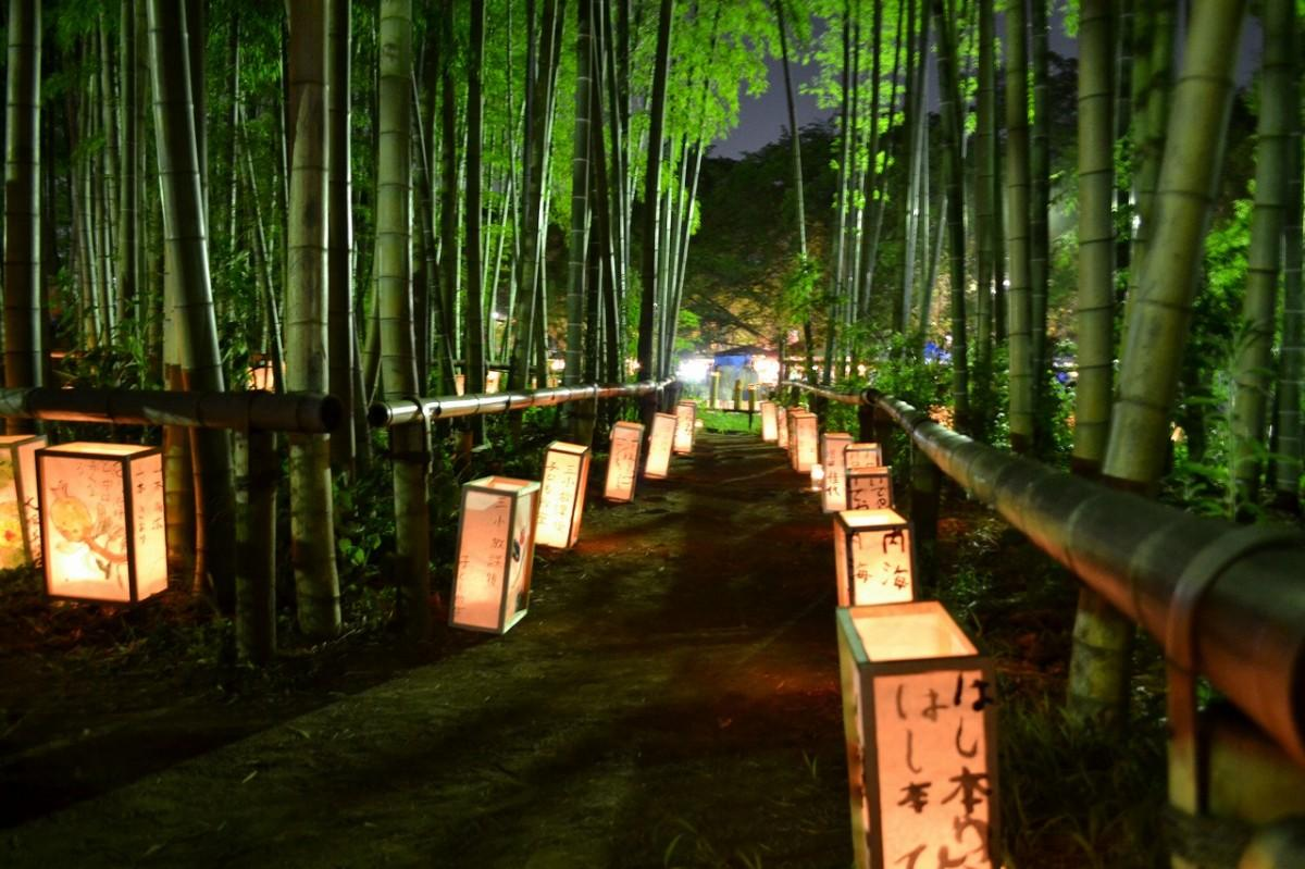 「たけのこ公園」では竹林を生かし「灯りの道」を演出する(写真提供=小平市)