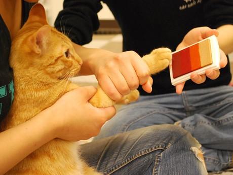 肉球にインクを塗る猫スタッフ「若」