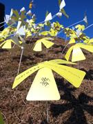神戸で「シンサイミライノハナ」-3万枚を超えるメッセージ集まる