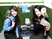 神戸のフクロウカフェ「ビビ&ジョージ」が1周年 フクロウスタッフ12種17羽に