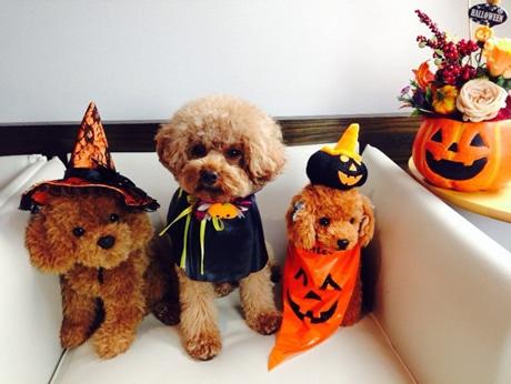 ハロウィーン仮装をするワオ・コーポレーションの社員犬・エディくん(中央)