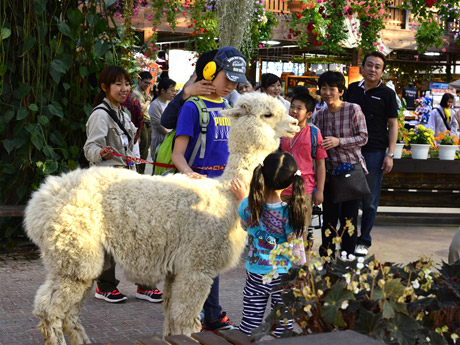 「神戸どうぶつ王国」で障がいのある子どもとその家族を動物園に招待するイベント「ドリームデイ・アット・ザ・ズー」が行われた。