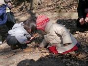 神戸・諏訪山に「森のようちえん」開校 親子で自然探検