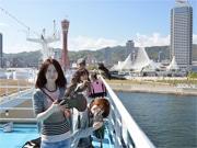神戸でフクロウが「ルミナス神戸2」船内初見学 神戸開港150年にちなみ