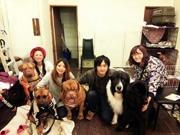 神戸・モトコー3で犬・猫の里親探すイベント 「認知症サポーター養成講座」も