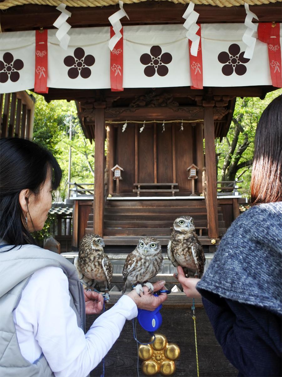 神戸北野天満神社で健康祈願するフクロウカフェ「BiBi&GeorGe(ビビ&ジョージ)」のフクロウスタッフ