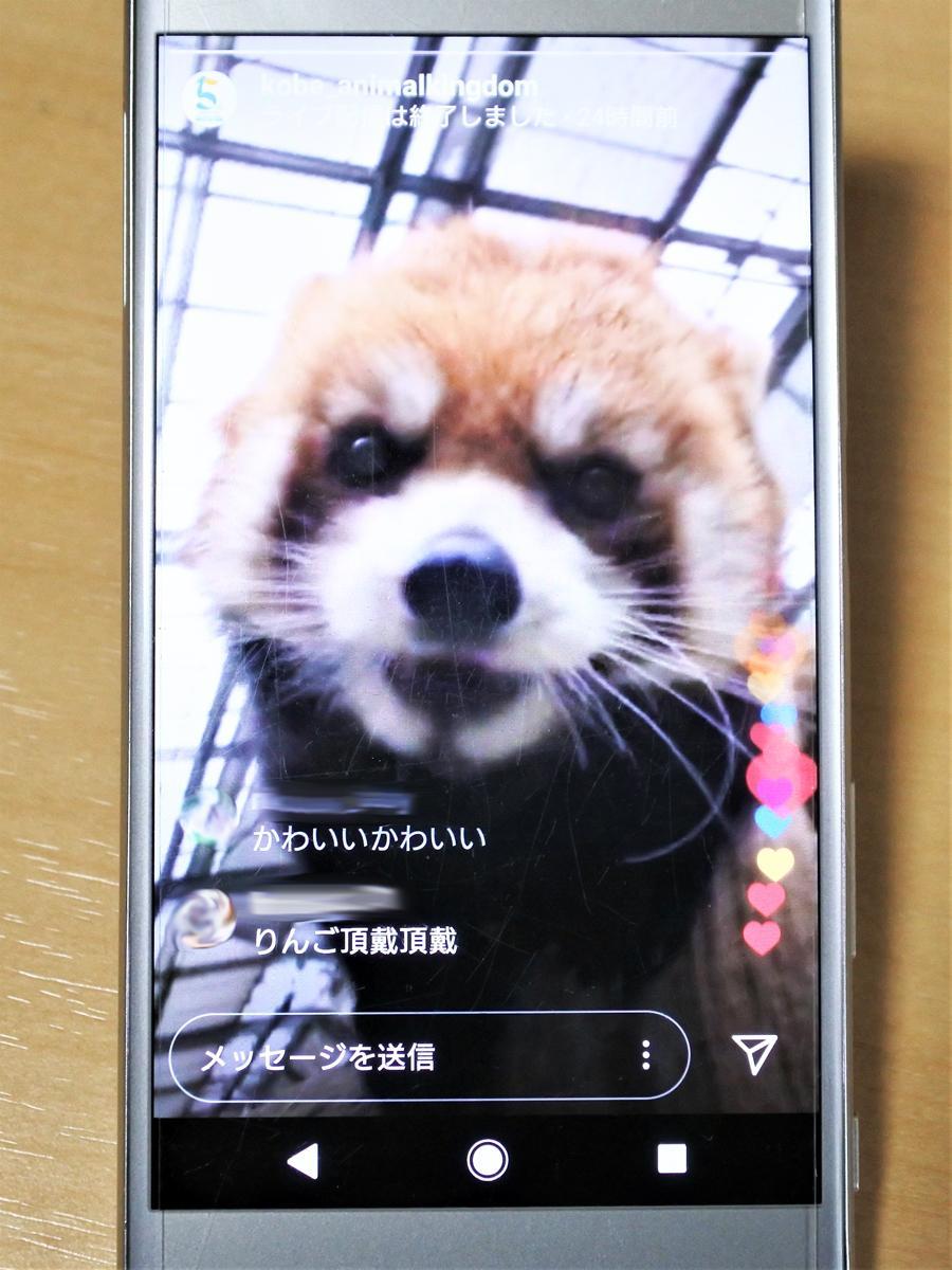 臨時休園中の「神戸どうぶつ王国」が公式インスタグラムでライブ動画配信、興味津々でカメラをのぞき込むレッサーパンダ