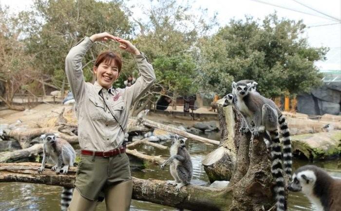 ワオキツネザルの生態を説明する「ワオワオトーク」の様子