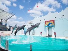 2023年閉園の須磨海浜水族園が「記録や記憶」残すアイデア募集 特設ホームページも