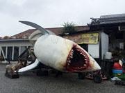 高知・台風の影響で巨大サメが転倒「おもしろいからそのままに」