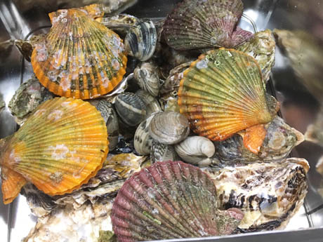 高知の観光交流施設に「土佐の牡蠣小屋」 がんがら焼きや土佐近海の干物焼きも