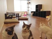 杉並区などの猫関連店舗でクイズラリー 猫カフェや雑貨店10店参加