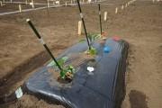 杉並区・浜田山にシェア畑 手ぶらで畑仕事、家族で楽しんで