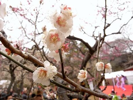 梅林には32種類約200本の梅が植えられている