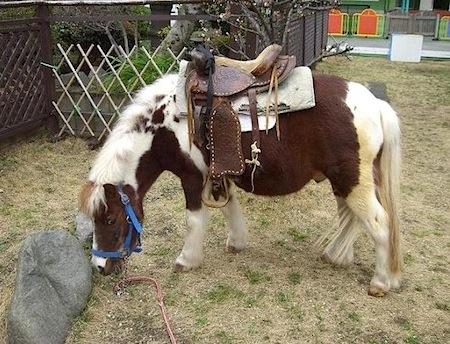 ポニーの乗馬体験は毎年人気がある