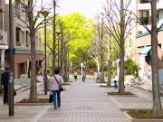 都筑区内のロケ地回るまち歩き企画-地元野菜使ったランチも