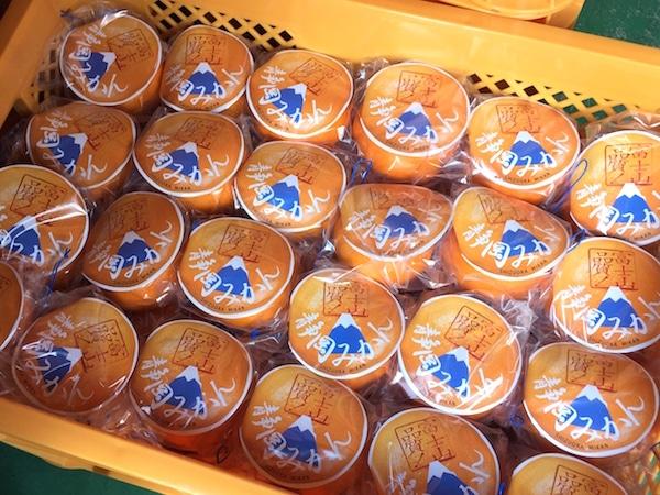 静岡みかんの主力品種「青島温州」が配布される