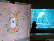 「ツヨシ 嫁入りおめでとう」 釧路からやってきたホッキョクグマ一般公開へ