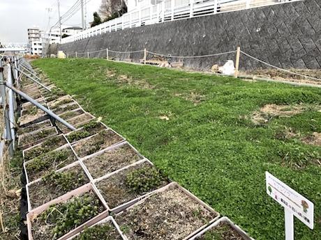 整備中の「早渕川・老馬谷ガーデン(HRG)」