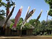 都筑民家園で恒例の大こいのぼり展示 こどもの日企画も予定