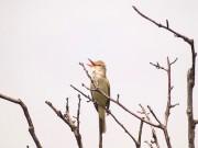 新横浜公園で「いきもの観察会」始まる 第1回目はオオヨシキリを探す