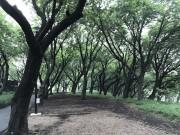 菊名桜山公園で恒例のジャズイベント「FOREST JAZZ」開催へ