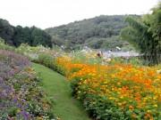 ズーラシア隣の「里山ガーデン」で秋の大花壇が公開中 コスモスなど秋の花が見ごろ