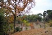 池辺市民の森の木々が赤く色づく 今年オープンした区内2カ所目の市民の森