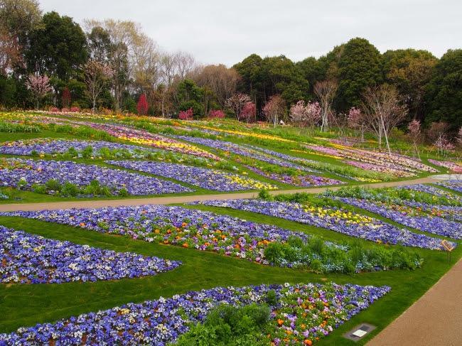 多様な花が植えられた大花壇