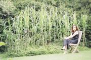 イギリスの庭ヒントに日本の植栽で庭造り 横浜都筑で講座開講