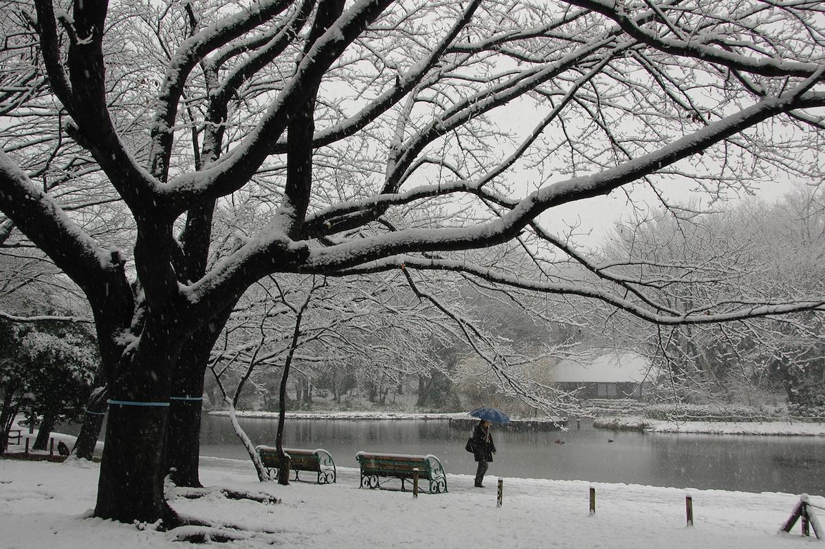 昨年の最優秀賞。撮影者は水原和夫さん。撮影場所はせせらぎ公園