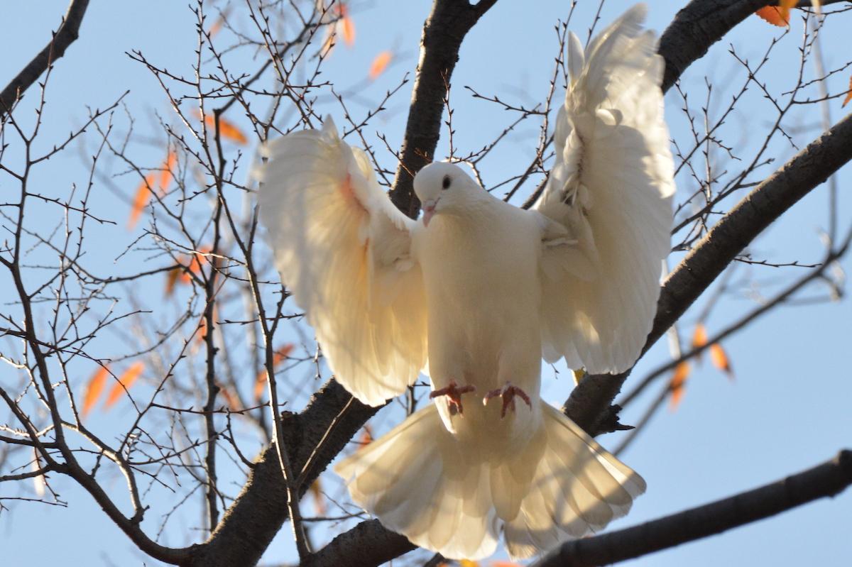 区内ではさまざまな野鳥を観察することができる