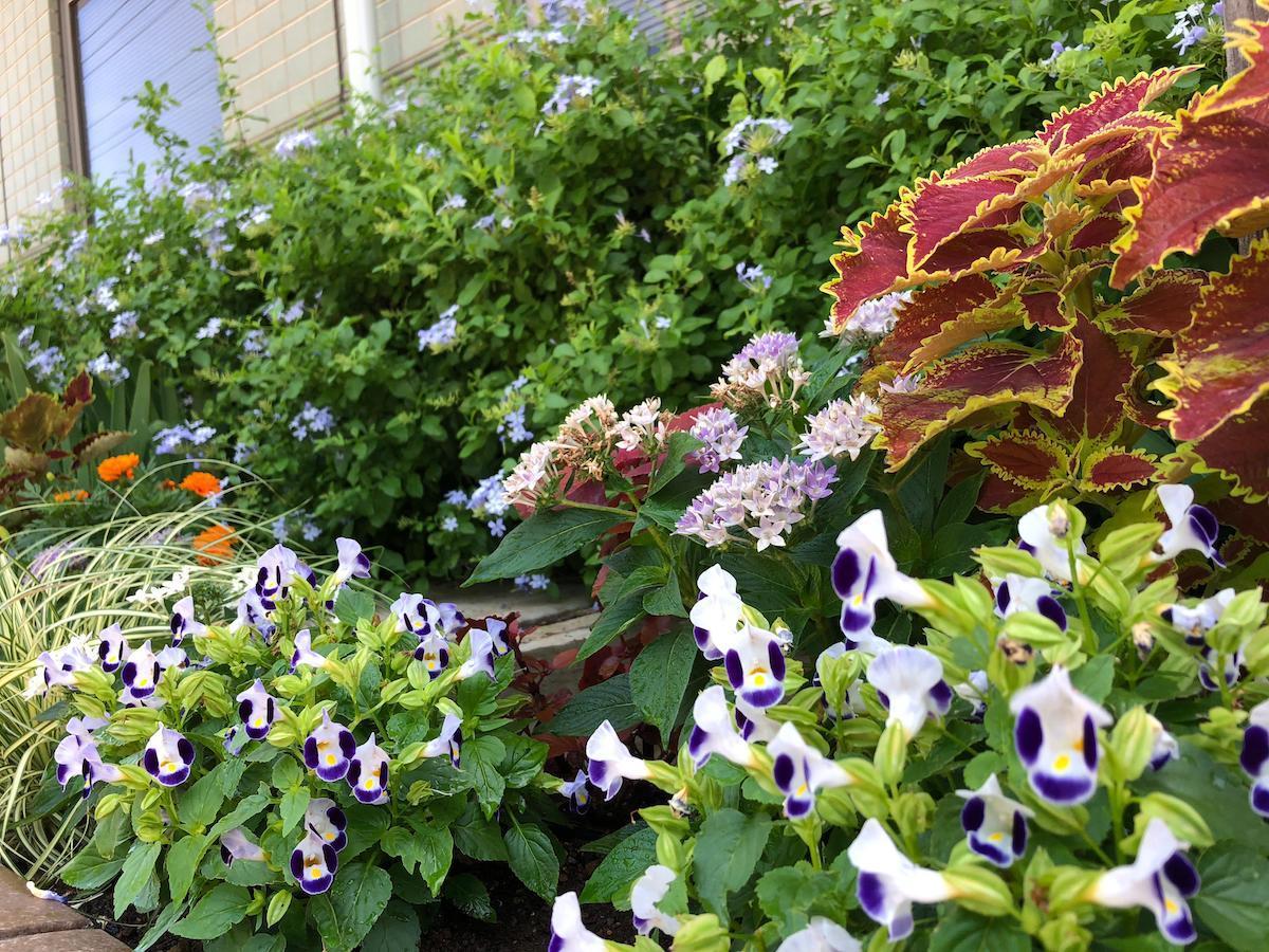 さまざまな花と緑の活動の紹介を行う