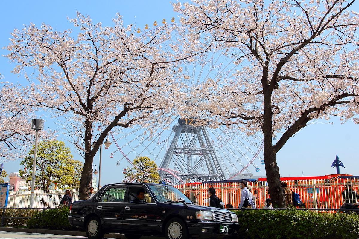 地域の桜スポットを案内してくれる