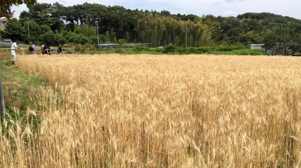 昨年の収穫イベントの様子