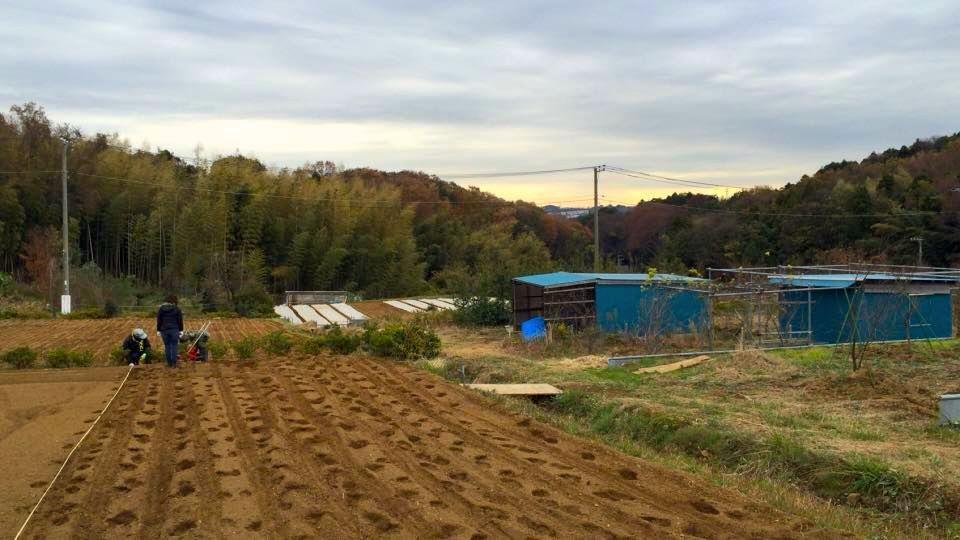 都筑ふれあいの丘近くの畑で開催