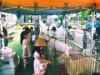 横浜・都筑の住展示場に移動動物園 ひつじやウサギとのふれあいやポニー乗馬も