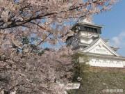 小倉城「大手門広場」でマーケットイベント ソメイヨシノ見頃に合わせて